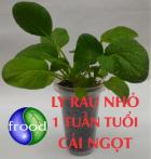 BÀI II.4: FROOD - ĐƠN GIẢN ĐỂ TRỒNG RAU