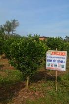 Thăm một số vườn và kho phân nông dân vĩnh cửu Đồng Nai