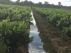Hình ảnh nhà vườn làm cơi đọt cam sành đồng loạt theo quy trình sản phẩm APSARA