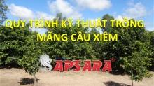 Quy trình kỹ thuật trồng mãng cầu xiêm Apsara