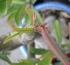 Nói về thụ phấn sứ thái