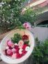Kinh nghiệm trồng hoa hồng leo đơn giản cho hoa quanh năm