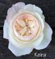 Hoa Hồng Keria